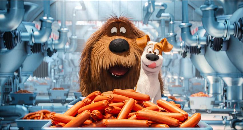 Кадр из фильма тайная жизнь домашних животных
